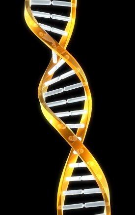 The DNA Portal